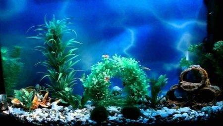 Фон для акваріума своїми руками (20 фото): робимо об'ємний задній фон з пінопласту, чорний 3D фон з малюнками з монтажної піни. З чого ще можна зробити фон?