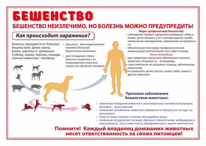 Графік вакцинації котів від хвороб