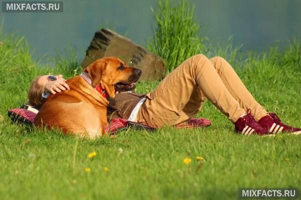 Корм для великих собак – правила вибору, рейтинг кращих виробників