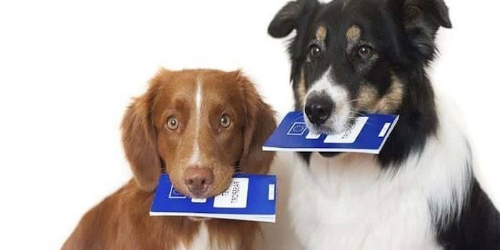 Податок на домашніх тварин у Росії в 2019 році – буде введено