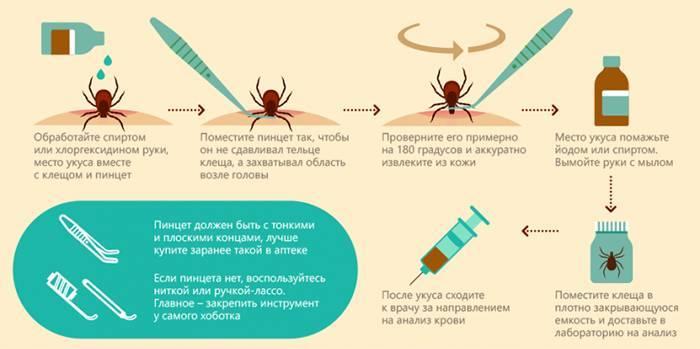 Симптоми та наслідки укусу кліща