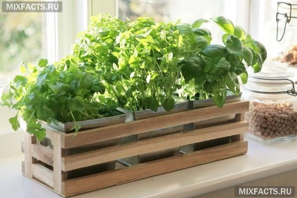 Вирощування зелені в домашніх умовах як бізнес