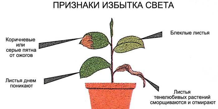 Як доглядати за домашніми квітами