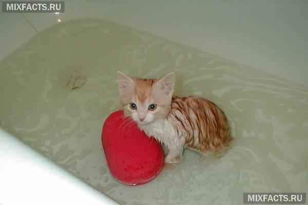 Як купати кошеня – 5 правил водних процедур