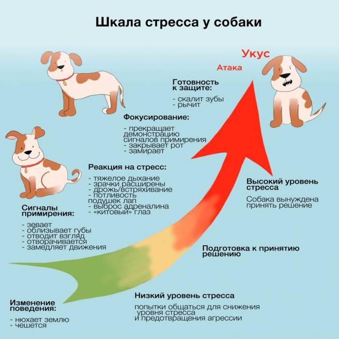 Як зрозуміти, що у собаки стрес