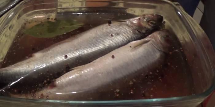 Засолювання риби в домашніх умовах 5 способами