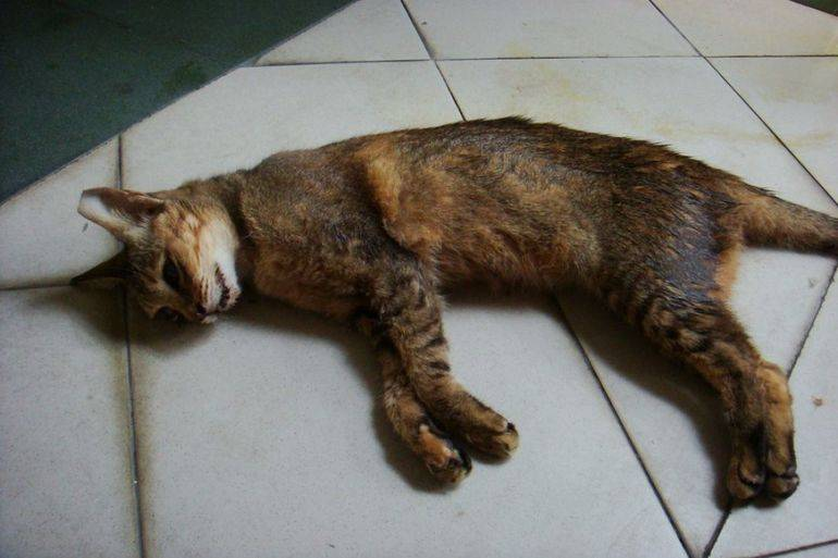 Вбити кішку у сні: значення по соннику, сюжет про задушенні дорослої тварини або кошеня своїми руками